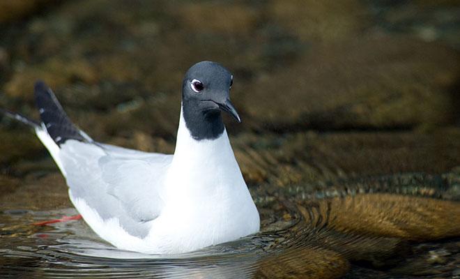 birdlist11